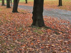 落葉の絨毯がピークに