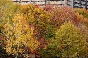 公園樹の色づき