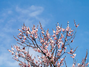 陽射し春めく