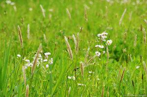 草原の現状