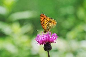 高原の蝶たち