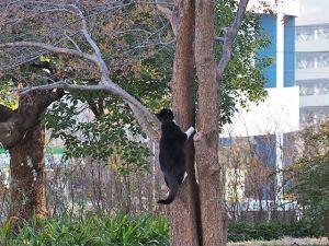 木登りノラ