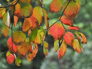 木の葉色づく頃に