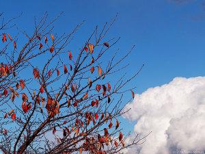 紅葉と夏雲