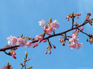 春爛漫の予告編