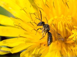 絶命したハチ