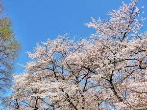 春本番の眺め