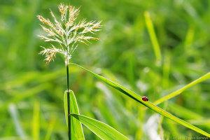 生物農薬参上