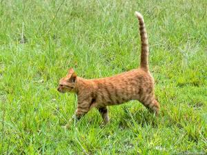 草むらで出会う猫