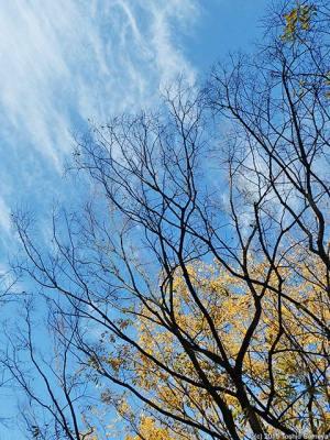 冬木立ちはもうすぐ