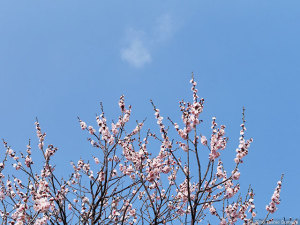 春霞の空の下
