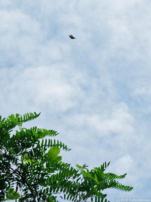 黒い飛翔体が・・