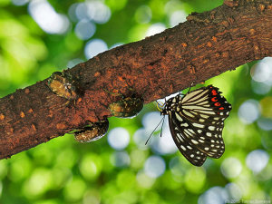 樹液に集まる昆虫達