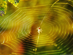 蜘蛛の巣光る