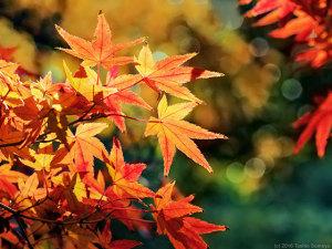 秋の名残の彩りが・・