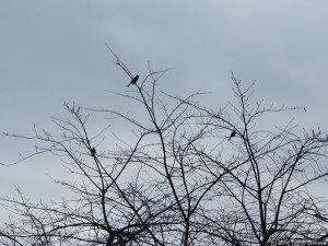 冬姿の木と曇り空、そして・・