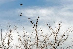 冬鳥たちの群れ