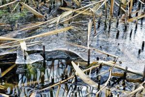 池に張る氷