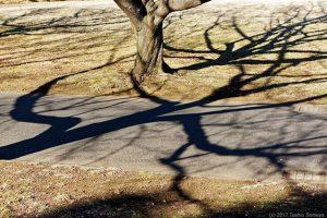 地を這う枝の影