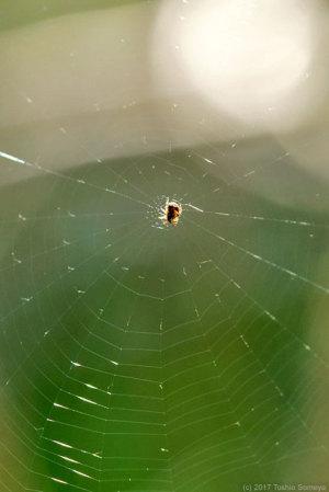 小さな蜘蛛登場
