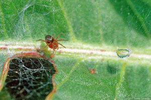 蜘蛛の赤ちゃん