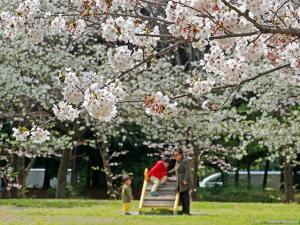 家族連れで賑わう公園