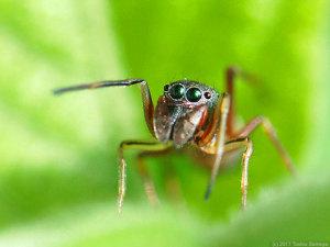 アリグモの顔