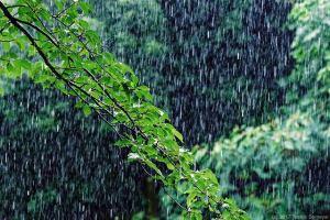 待望の(?)雨が・・