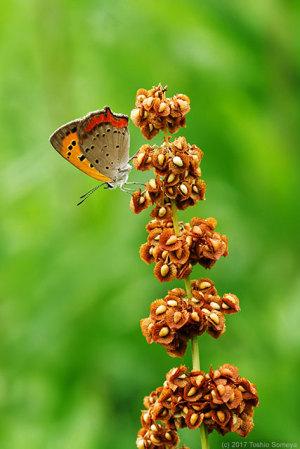 蝶達は今・・