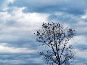 目まぐるしく変わる空