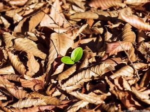 落ち葉の中からひょっこり