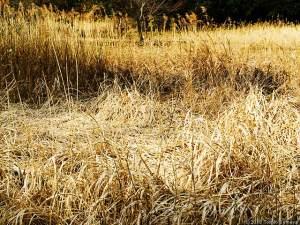 枯れ色の野で・・