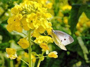 飛び者たちの春