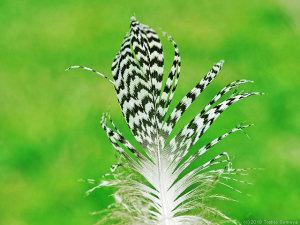 草むらに落ちていた羽根
