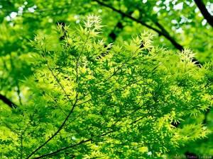 新緑に癒される