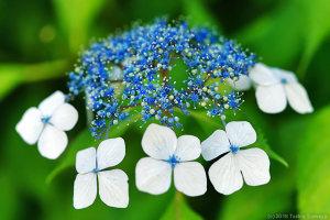 本当の花はこっち!