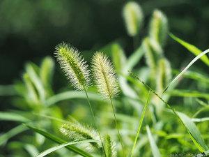 草むらに秋の雰囲気が・・