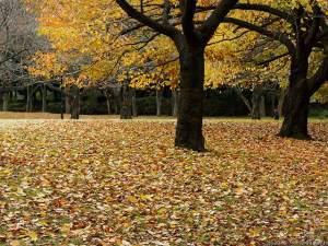紅葉のサクラの木で・・