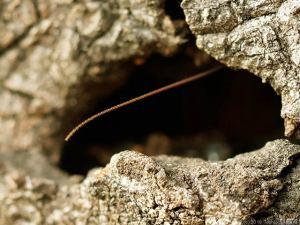 幹の穴からニョキっと・・