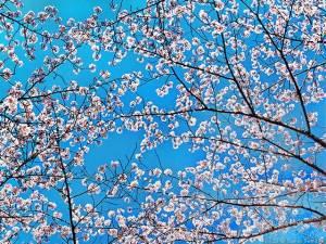 平成最後の花景色