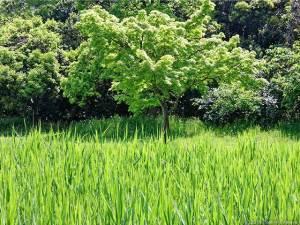 萌える緑の競演