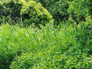 夏草繁る場所で・・