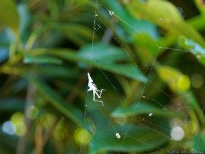 蜘蛛の網に引っかかった抜け殻