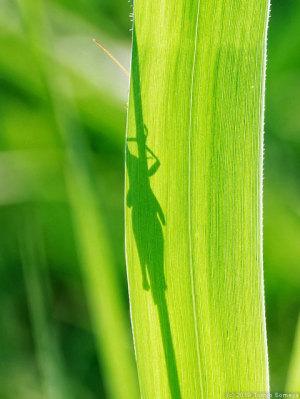 水草の葉にくっきりシルエットが・・