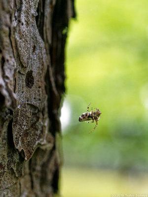 木立の中でゆらゆらしてた蜘蛛