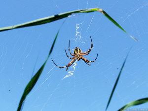現在蜘蛛事情