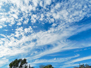 うろこ雲も湧き始めた