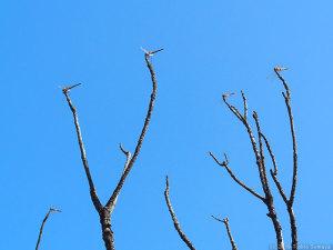 秋空の下のアキアカネ
