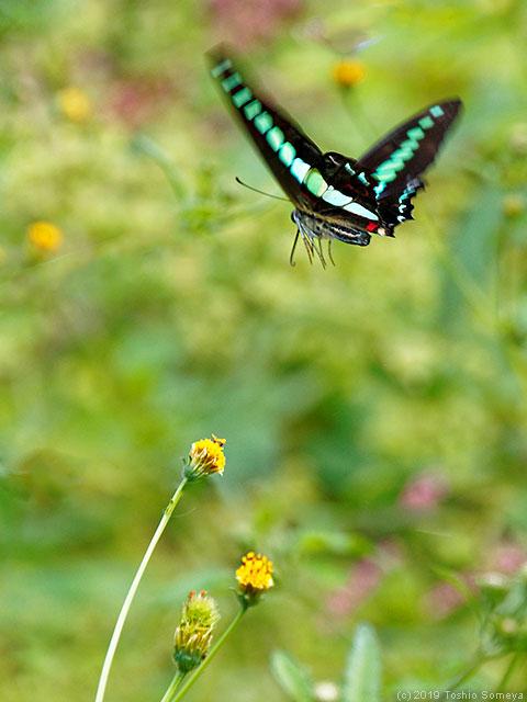 今は、蝶・超多忙