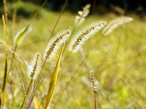 温色系に染まり始めた野草